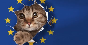 brexit pussy cat