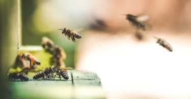 shallow focus photography of bees flew in mid air